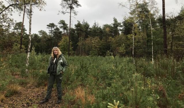 Boswachter Corien Koreman in een perceel nieuw, jong bos. Vijf jaar geleden is op deze plek geoogst. FOTO: Carol Dohmen