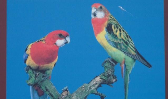Deze vogels zijn er mogelijk ook