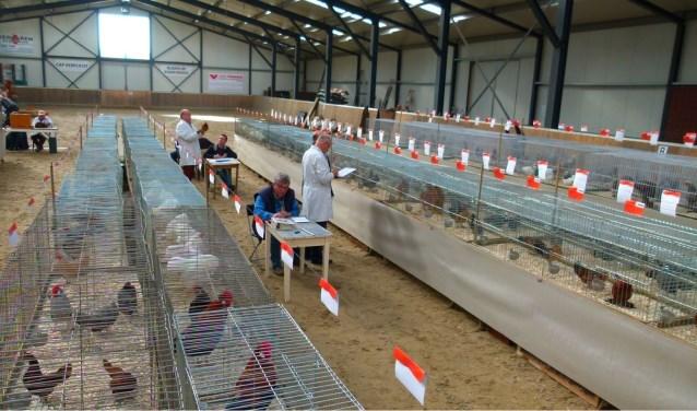 Alle dieren worden eerst gekeurd door erkende keurmeesters. Zondagmiddag om 14.00 uur is de prijsuitreiking.