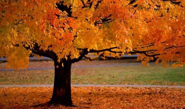 De Indische vereniging O.W.T.S. (Oost en West Te Saam ) viert de herfst.