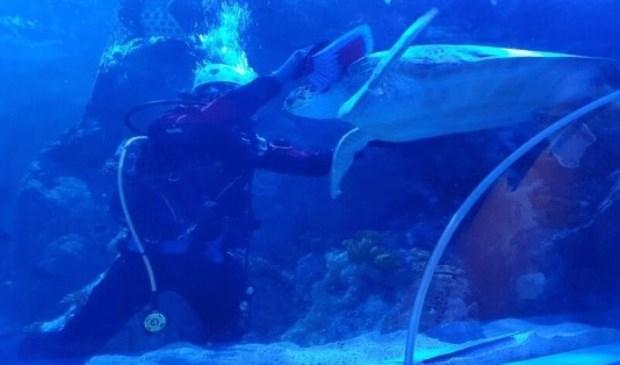 Zeeschildpad Ernie had geluk. Hij geniet van een borstel over zijn kop.