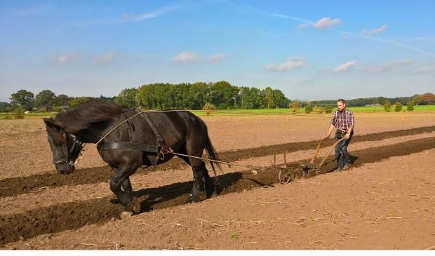 Ploegen is niet alleen voor grote paarden ook de kleintjes staan hun mannetje.