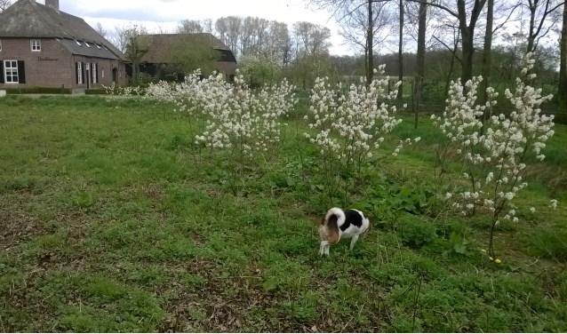 Wie grond ter beschikking heeft en deze meerdere jaren wil inrichten als pleisterplaats voor bijen kan terecht op www.kennisnetwerkbijen.nl.