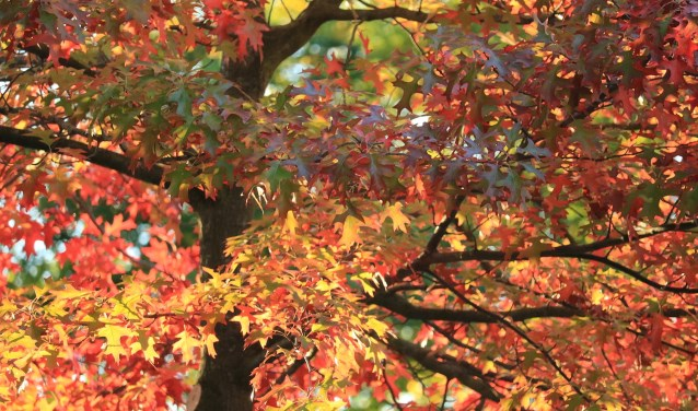 Foto van de week: herfst in Hoogvliet.