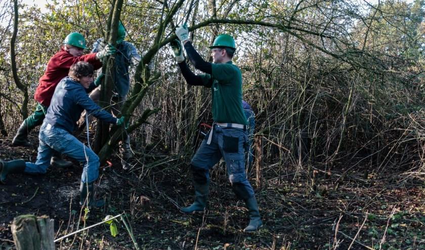 Zwaar en minder zwaar werk wordt verricht op de locaties waar de natuurwerkdag zaterdag 3 november wordt gehouden. Foto: Henny de Joode