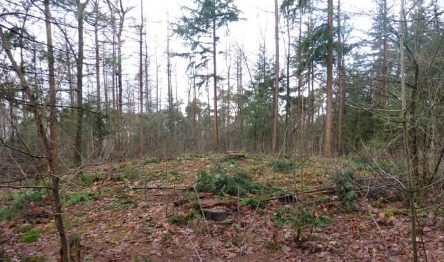Een van de twintig rond Eibergen aan te treffen grafheuvels.