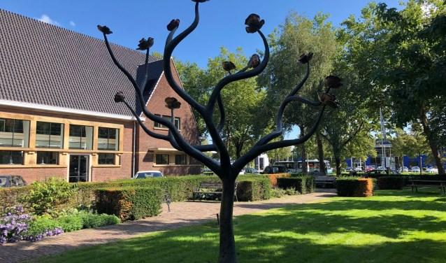 De Rozenboom in de tuin van het vroegere schoolgebouw van het Celeanum.