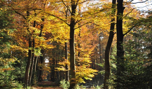 In oktober worden op verschillende data in de herfst excursies aangeboden bij het BuitenCentrum van Staatsbosbeheer.
