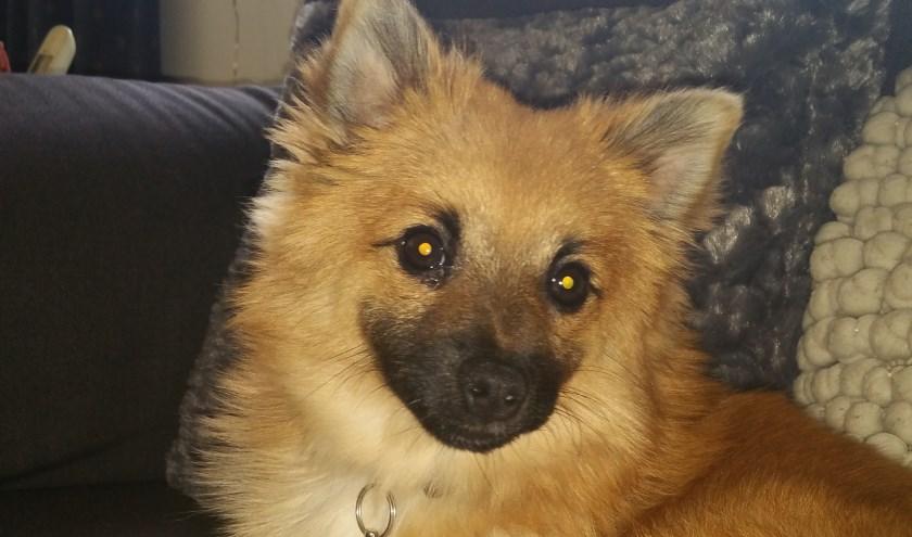 Elke week zet Dierenopvangtehuis De Bommelerwaard een dier in het zonnetje. Deze week is dat Sammy. Kijk voor meer informatie op www.dierenasiel-bommelerwaard.nl.
