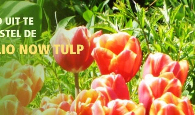 End Polio Now tulpen ter bestrijding van Polio wereldwijd