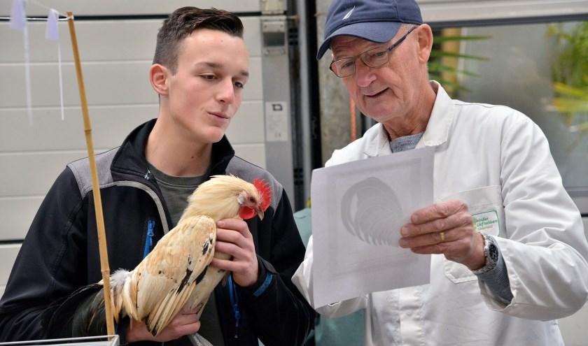 Op de kleinvee keuring van Sport en Nut krijgt Thom Maaijen advies van keurmeester Bertus den Blanken. FOTO: Paul van den Dungen