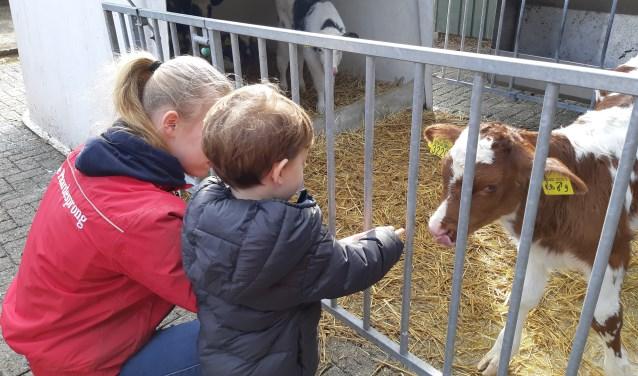 Kinderen kunnen zaterdag op de boerderij komen helpen, spelen en er is zelfs een ontbijtje. Je kunt er terecht van 07.00 tot 11.00 uur.