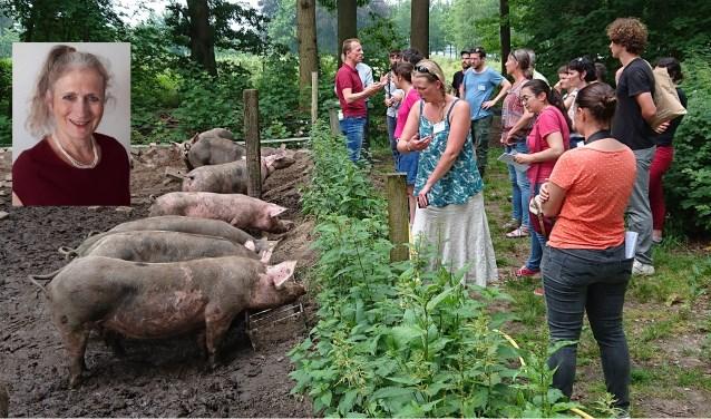 Kippen, varkens en runderen mogen gewoon vrij rondlopen op de Herenboerderij. Het is dan ook de bedoeling dat het zo natuurlijk mogelijk is voor de dieren. Inzet: Marlies.