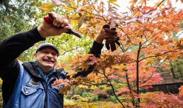 Japans snoeien gebeurt heel precies, vertelt tuinman Nelis.