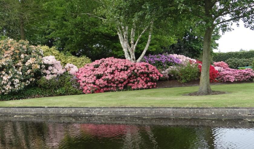 De tuin die de Rabobank-wisseltrofee veroverde is de tuin die het hele seizoen lang het beste uit de bus kwam. Met veel bloeiende Rhododendrons en Azalea's was het een lust voor het oog.