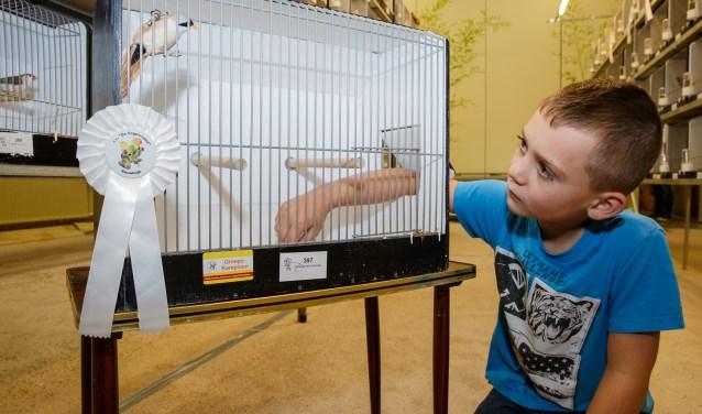 De Vogelvriend Nieuwkuijk presenteert dit weekeinde voor de vijftigste keer een vogelshow.