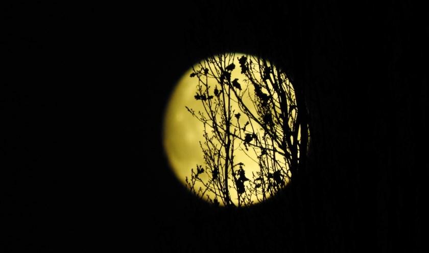 maan schijnt door bijna kale boomtakken