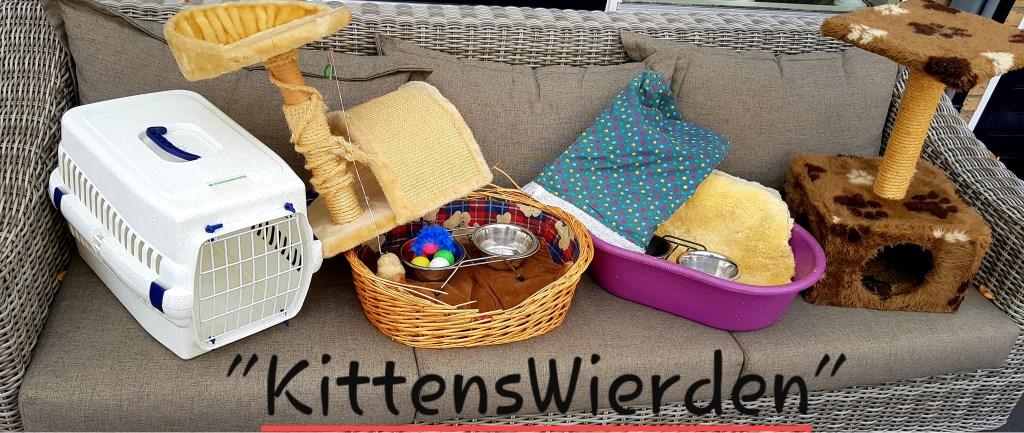 De cadeautje die Jolanda van mevrouw B. heeft gekregen. Foto: Kittens Wierden © Persgroep