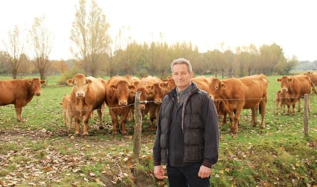 Rundveehouder René Vlemminx met zijn kwaliteitskoeien van het Limousin ras.