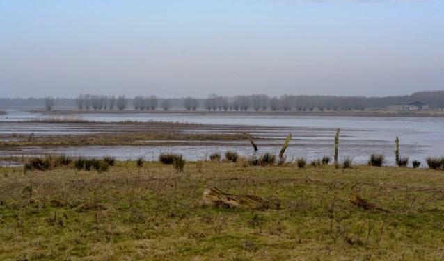 Zaterdag gaan de knotters van de Natuur- en Vogelwacht eenmalig wilgen snoeien op de Tongplaat.