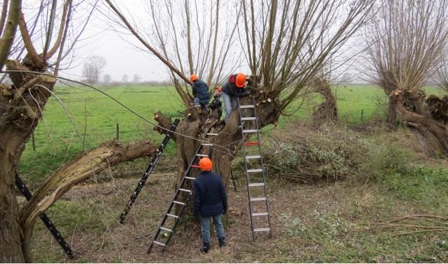 Kinderen van groep 7 en 8 gaan wilgen knotten in de Liemers. (foto: NME de Liemers)
