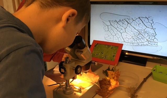 Turend door een microscoop bekijken de leerlingen hoe de nerven in een blad eruit zien. Door de lessen op NME-centrum De Elzenhoek leren de scholieren over de wonderen der natuur en gezond leven.