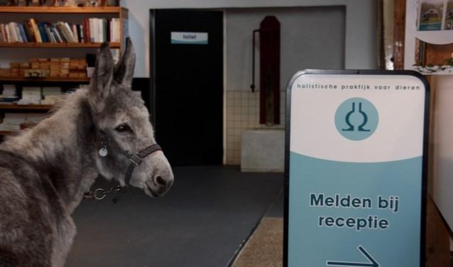 Emma en Menno bij het Holistische kliniek Paard in De Bilt.