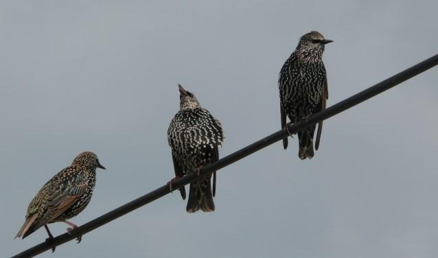 De vogeltrek staat centraal tijdens de lezing (foto Lia Lobel).