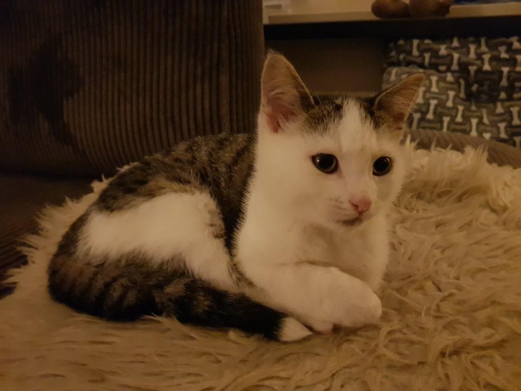 Marshall.  Foto: Kittens Wierden / Jolanda © Persgroep