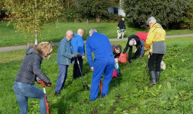 Bewonersgroep Waterland plant bloembollen. Foto: Roel van Deursen