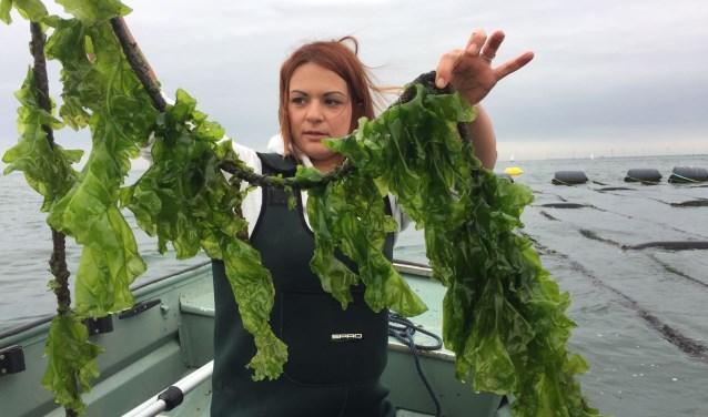 Onderzoekster Julia Wald met de oogst van geteelde zeesla: na drie weken in het water. FOTO: PR