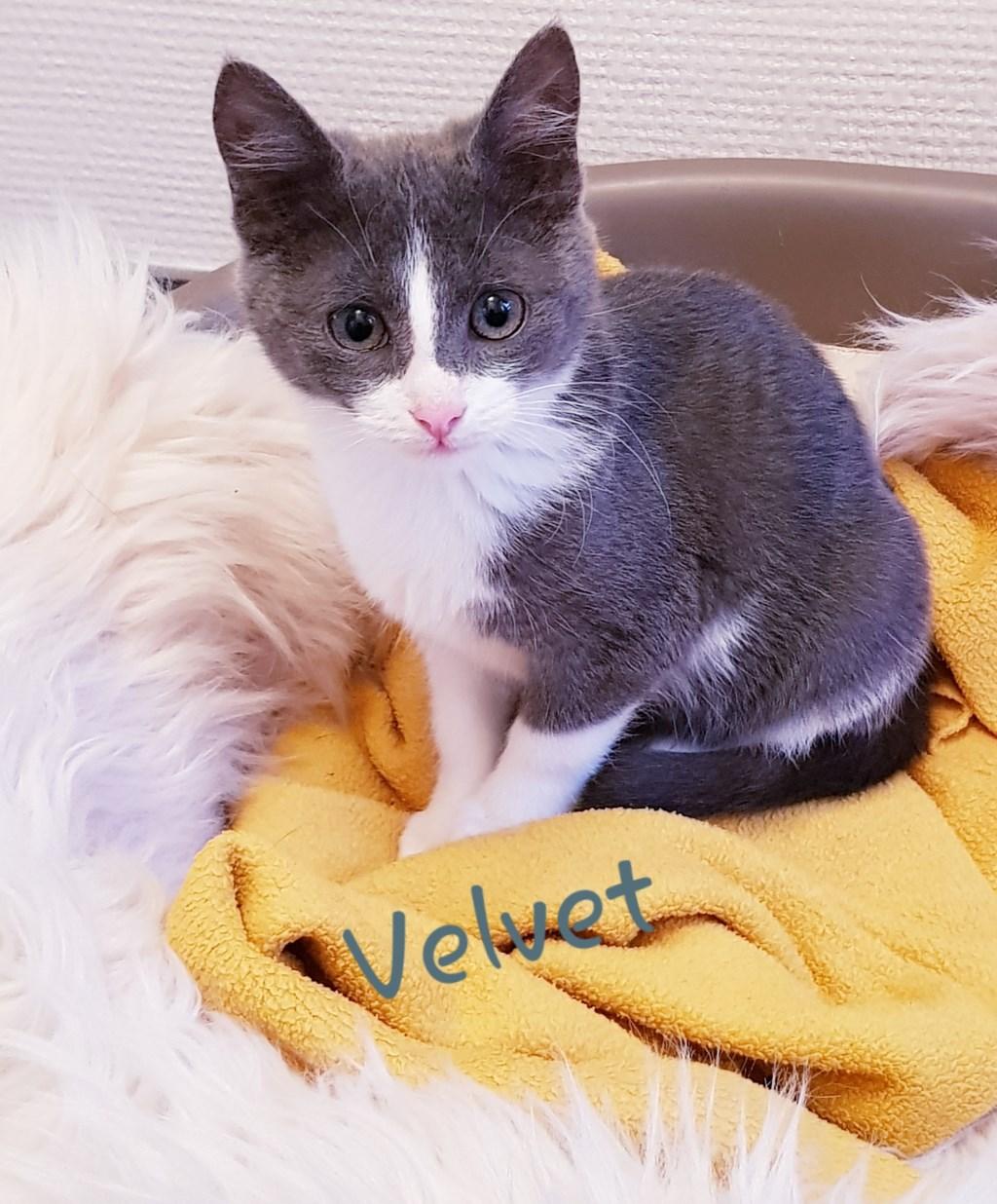Velvet. Foto: Kittens Wierden © Persgroep