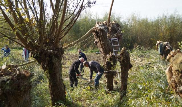 Tijdens Natuurwerkdag waren er veel vrijwiligers aan de slag in natuurreservaat Kloosterwiel. Foto: Marielle Pelle