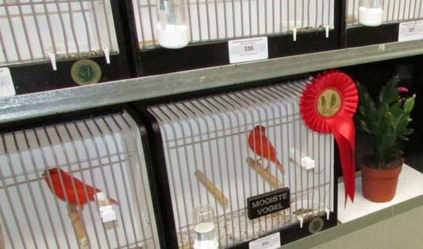 Voor de gelegenheid komen keurmeesters uit het zuiden van het land naar Rijssen om vogels te keuren. Foto: E.K.R.V. Rijssen.