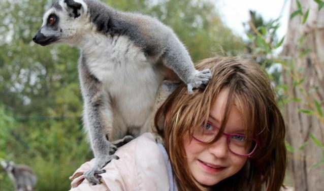 In Nuenen mogen Yindé en haar vriendinnetje Sterre hun lievelingsdieren voeren: ringstaartmaki's. De beestjes klimmen op hun schouders en eten uit hun handen.
