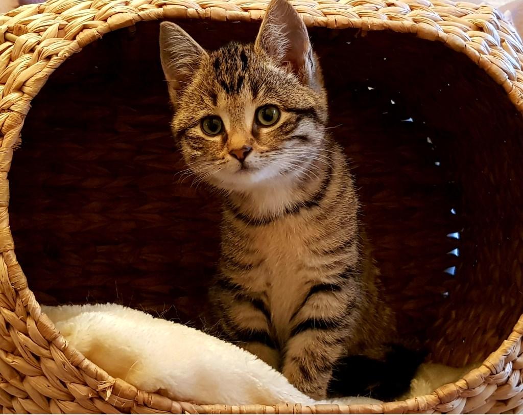 Sylke. Foto: Kittens Wierden © Persgroep