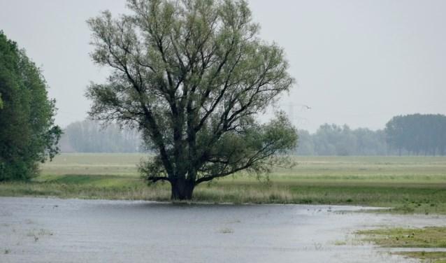 De ontwikkeling van de natuur in de Biesbosch wordt in De Groene Draak toegelicht (Foto: PR)