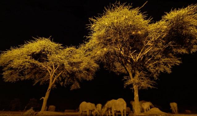 Sem Jones maakte deze foto vanuit een schuilhut in Botswana. Inzet: 'Plastic dood' van Dirk Hoogenstein.