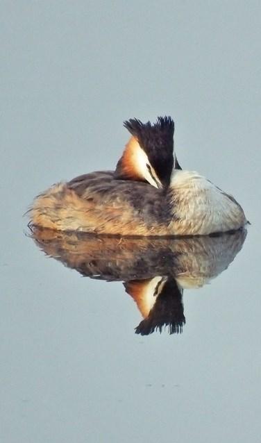 Door gebruik te maken van fotohutten komen dieren vaak erg dichtbij. Foto: Michel Wissink.