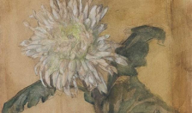 Piet Mondriaan, Kleine chrysant, ca 1899, potlood waterverf en dekwit op papier. Collectie Gemeentemuseum Den Haag