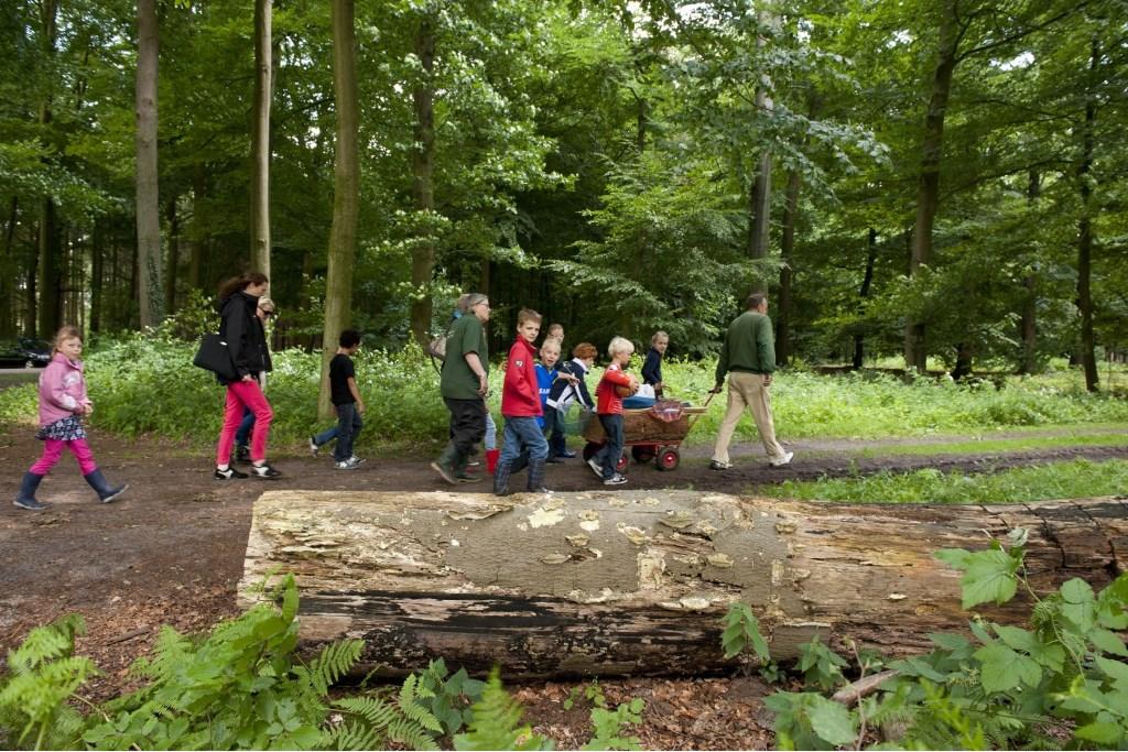Welke sporen ontdek jij in het bos? Leuke uitdaging tijdens de excursie 'Speuren van sporen' in Hof Espelo. Foto: Cees Elzenga © Persgroep