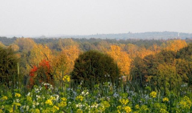 Prachtige kleurrijke herfstplaatjes richting Bentheim, gefotografeerd door weer liefhebber Tonny Morsink uit De Lutte. Meer lezen? Surf naar mijneigenweer.nl/weerstationdelutte.
