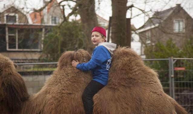 Zaterdag kun je een kameel tegenkomen in Krimpen aan den IJssel. (Foto: Anton Sinke)