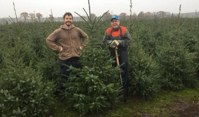Robert (bruin vest) en vader Floor van Eldorado Haamstede zijn druk in de weer met de kerstbomen. FOTO: Gerrit van Loon
