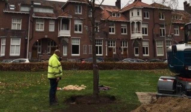 Utrecht past zich aan aan het veranderende klimaat door boomsoorten te planten die tegen extreme weersomstandigheden kunnen.