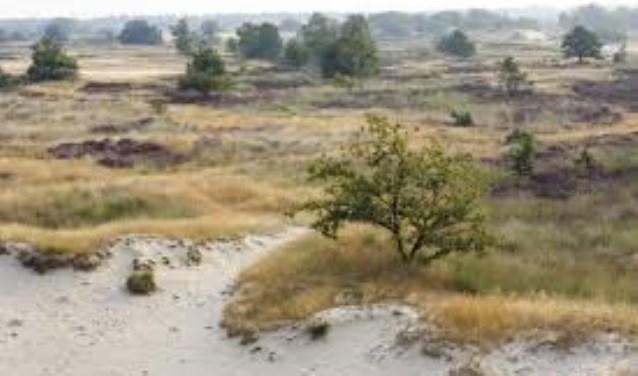 De provincie gaat samen met een aantal partners een impuls geven aan de duurzame agrarische ontwikkeling van het gebied rond de Loonse en Drunense Duinen.