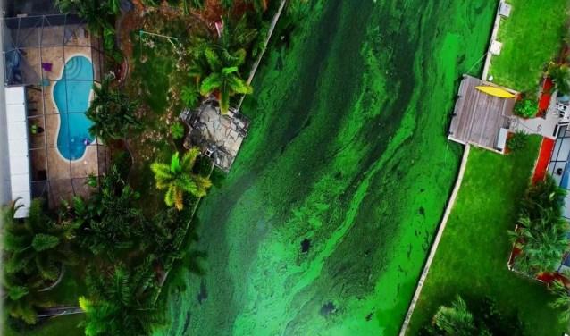 De giftige algengroei vormt een acuut probleem voor inwoners van Florida. De algengroei veroorzaakt, door daling van het zuurstofgehalte, sterfte van het waterleven en brengt drinkwatervoorziening in gevaar.