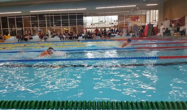 Zwemmers in actie tijdens de wedstrijd. (Foto: Privé)