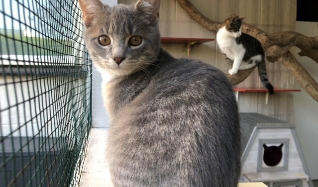 Lola werd op straat gevonden en is nu 10 maanden. Karel werd afgestaan en is nu 18 weken.