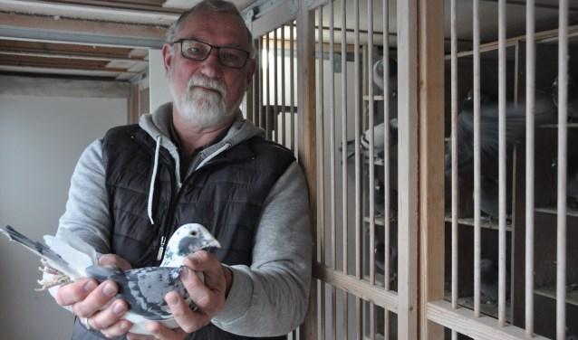 Peter met een van de duivinnen. 'Mijn duivinnen vliegen beter dan mijn doffers'. FOTO: Julie Houben